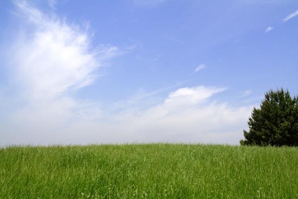 トップページ画像。芝生の写真